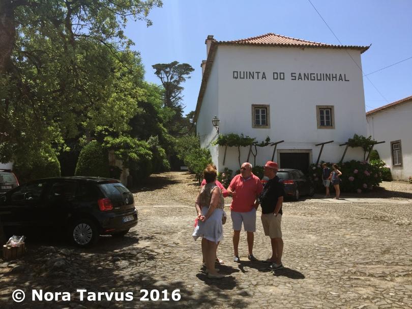 TravelingPortugalDay3Winery3202 kopio