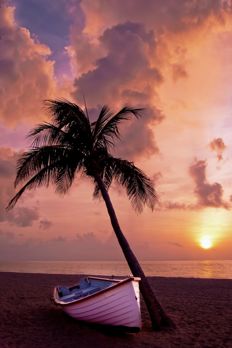 palm-tree-166738_1920