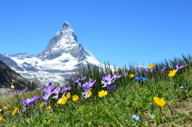 alpine-beautiful-bloom-267133